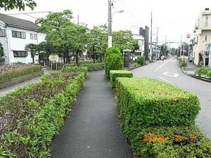 宮坂一丁目城山通り沿い歩道、防犯対策として街路樹の剪定